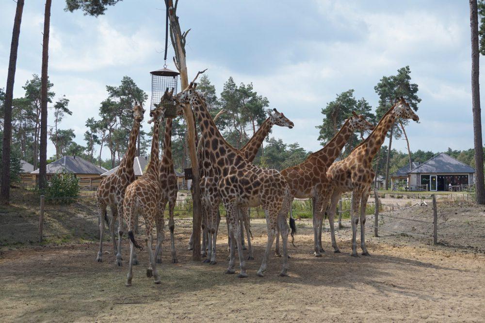 Uitzicht Safari Resort Beekse Bergen huisje 228